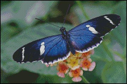 click here to view larger image of Blue Butterfly  (chart)
