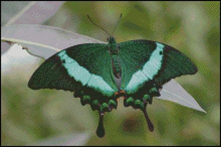 click here to view larger image of Green Butterfly  (chart)