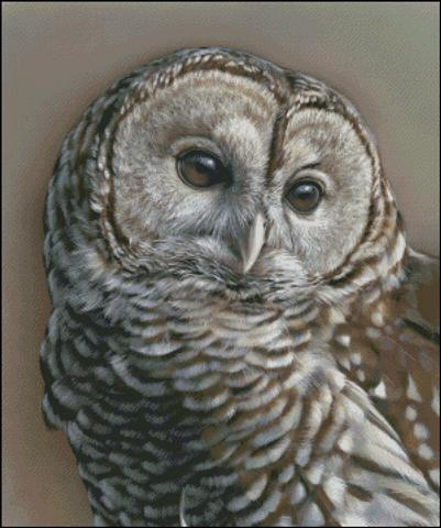 click here to view larger image of Gaze - Barred Owl (chart)