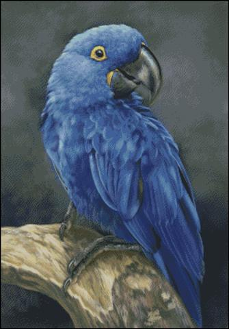 click here to view larger image of Blue Hyacinth Macaw Study (chart)