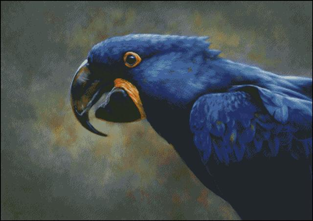 click here to view larger image of Blue Hyacinth Macaw (chart)