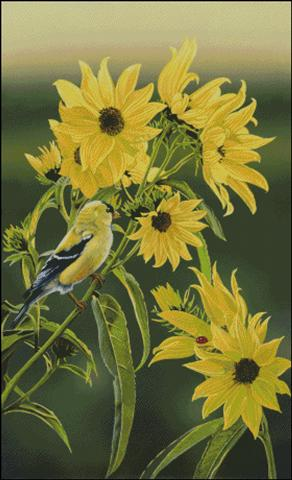 click here to view larger image of Goldfinch (chart)
