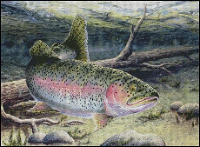 click here to view larger image of Rainbow Trout (chart)