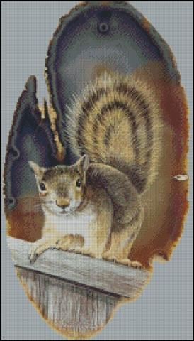 click here to view larger image of Gray Squirrel (chart)