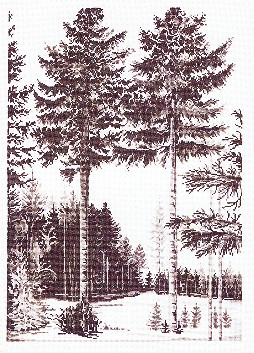 click here to view larger image of Trees (counted cross stitch kit)