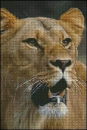 click here to view larger image of Hungry Lioness (chart)