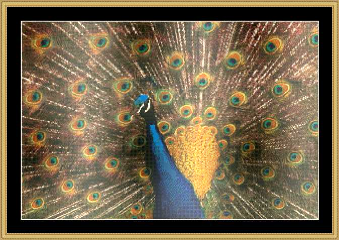 click here to view larger image of Peacock (chart)