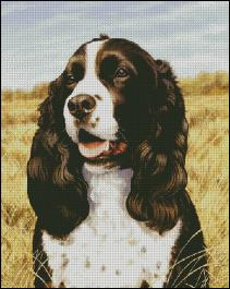 click here to view larger image of Field Companion Springer Spaniel (chart)