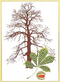 click here to view larger image of Chestnut Tree (counted cross stitch kit)