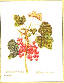 click here to view larger image of Currant Vine (counted cross stitch kit)