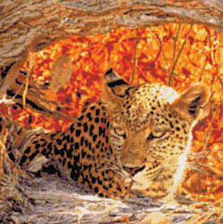 click here to view larger image of Hiding Leopard (chart)