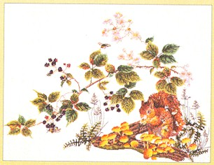 click here to view larger image of Squirrel - Aida (counted cross stitch kit)