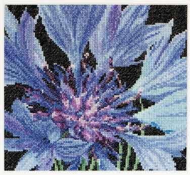 click here to view larger image of Cornflower (counted cross stitch kit)