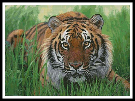 click here to view larger image of Bengal Tiger in Grass (chart)