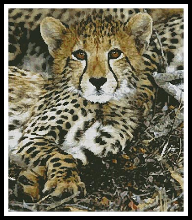 click here to view larger image of Baby Cheetah (chart)