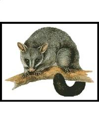 click here to view larger image of Brush Tail Possum (chart)