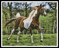 click here to view larger image of Arabian Horse (chart)