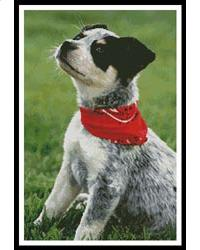 click here to view larger image of Cattle Dog (chart)