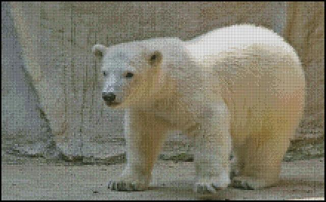 click here to view larger image of Baby Polar Bear (chart)