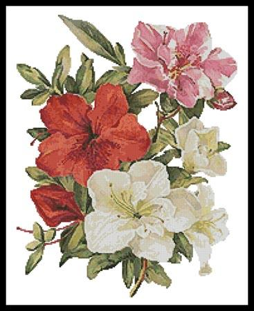 click here to view larger image of Azaleas (chart)