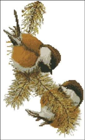 click here to view larger image of Chestnut Backed Chickadees (chart)