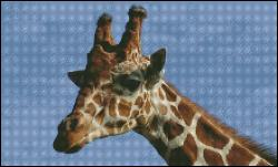 click here to view larger image of Giraffe (chart)