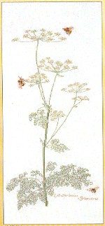 click here to view larger image of Bees And Queen Ann's Lace (counted cross stitch kit)