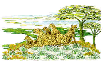 click here to view larger image of Cheetahs (chart)