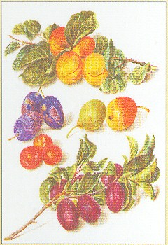 click here to view larger image of Assortment of Fruit (counted cross stitch kit)