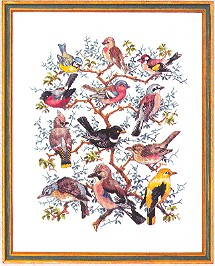 click here to view larger image of Bird Identification (counted cross stitch kit)