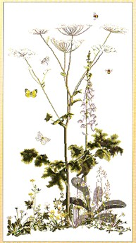 click here to view larger image of Queen Annes Lace - Aida (counted cross stitch kit)