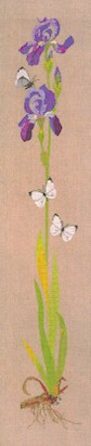 click here to view larger image of Iris With Butterflies (counted cross stitch kit)