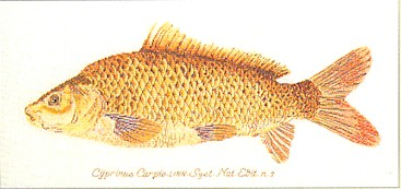 click here to view larger image of Fish (counted cross stitch kit)