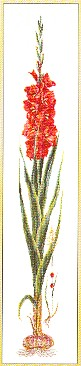 click here to view larger image of Red Gladiola - Aida (counted cross stitch kit)