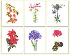click here to view larger image of Six Floral Patterns (Floral Studies 2) - Aida (counted cross stitch kit)