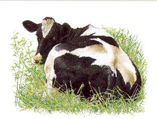 click here to view larger image of Holstein Cow Looking Back (Aida) (counted cross stitch kit)