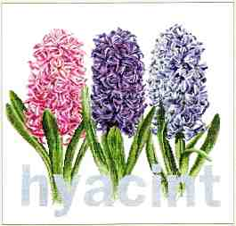 click here to view larger image of Hyacinth - Aida (counted cross stitch kit)