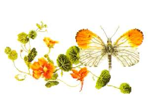 click here to view larger image of Orange Tip Butterfly - Aida (counted cross stitch kit)
